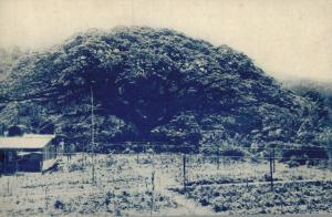 Saman Tree San Antonio Nursery Trinidad Postcard 01.89