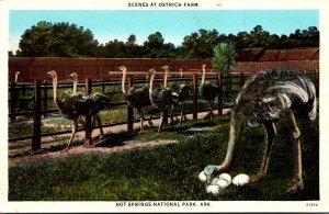 Arkansas Hot Springs Scenes At The Ostrich Farm Curteich