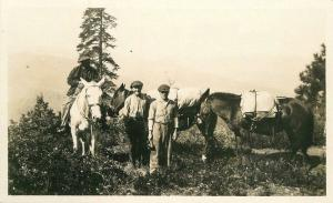 Back County Outdoor Life Camping Horse Pack Mules C-1910 RPPC real photo 541