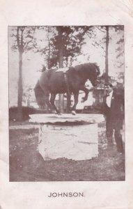 Johnson Performing Circus Type Horse 1916 WW1 Postcard