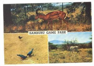 Samburu Game Park, Animals, Kenya, Africa, PU-1972
