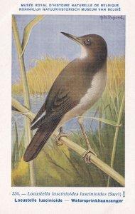 Wood Warbler Locustella Luscinioides WW2 Bird Rare Postcard