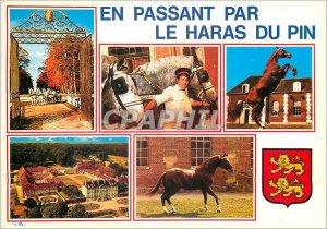 Postcard Modern Passing by Haras du Pin Horses