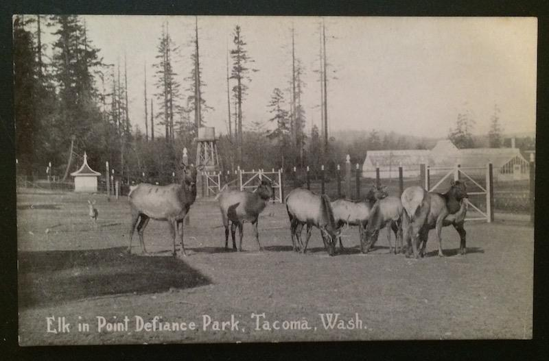 Elk in Point Defiance Park, Tacoma, Wash. Pacific Novelty Co.