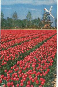 Netherlands, Keukenhof, Lisse-Holland, 1967 used Postcard