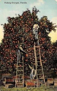 Picking Oranges in FL Citrus Unused