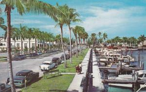 Coconut Palm-Lined Avenue, Along Yacht Basin, Ft. Myers, Florida, PU-1960