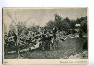 137947 Caucasus Abkhazia GAGRA Coconut palms & alley bananas