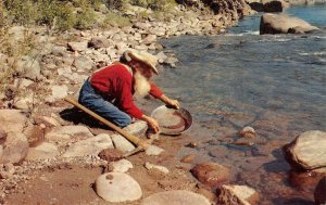 THE OLD MINER Panning for Gold Mining ca 1960s Vintage Postcard