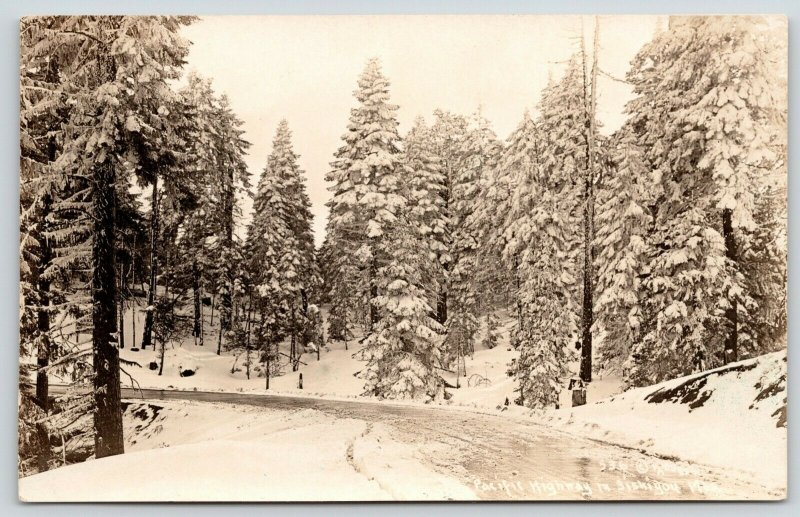 Siskyon Mountains Oregon~Pacific Highway~Snow Flocked Evergreen Trees~1940s RPPC