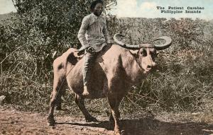 Philippine Islands - The Patient Caraboo (Man on a Steer)