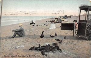 26277 MA, Salisbury, 1909, Ocean Front beach, ducks and peopleon beach