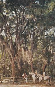 HILTON HEAD, South Carolina, 1940-1960's; Sea Pines Plantation, Paradise For ...