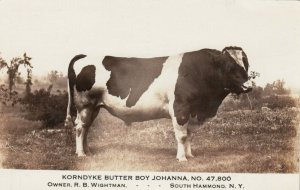 RP, SOUTH HAMMOND , New York, 1913 ; Champion Cow
