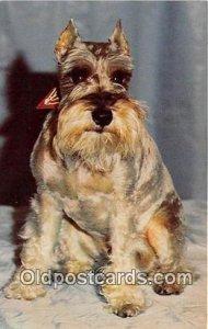 Schnauzer Dog Unused
