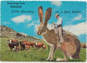 Greetings from OREGON, Cattle Punching on a Jack Rabbit, 1962 unused Postcard