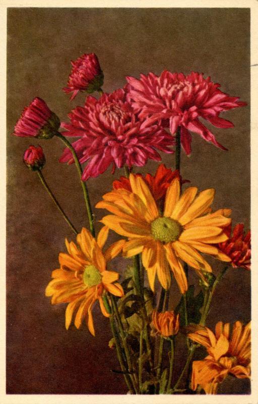 Flowers -   Chrysanthemum                            (Thor & Gyger #3119)