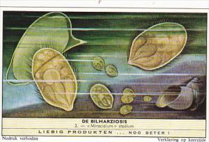 Liebig Trade Card s1751 Bilharziosis Parasite Disease No 2 Miracidium stadium