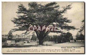 Old Postcard Montigny Lencoup Cedre plant by Bernard de Jussieu in 1734 in th...