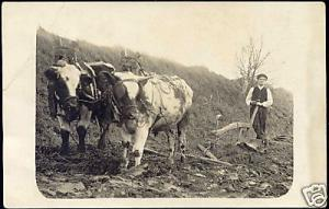Farmer Ploughing his Land with Two Bulls, Cow 10s RPPC