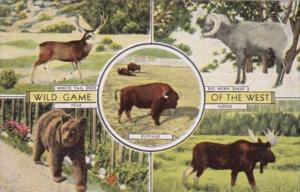 Wild Game Of The West Bear Moose White Tail Deer & Big Horn Sheep