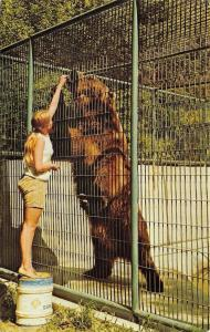 Bismarck ND~Dakota Zoo~Lady Feeds Alaska Brown Bear, Against Rules~Clyde~1950s