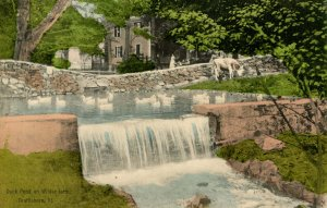 VT - Brattleboro. Wilder Farm, Duck Pond, Cows