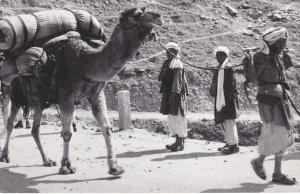 RP, Two Men Observing A Man Pulling A Camel, PU-1965