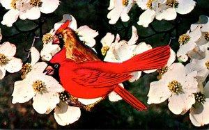 North Carolina State Flower The Dogwood and State Bird The Cardinal