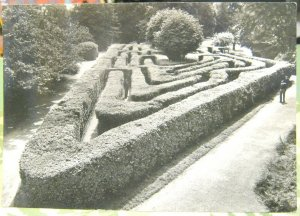 England Middlesex Hampton Court Palace The Maze - unposted marked