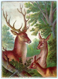 DEER IN FOREST LITHO*1800's VICTORIAN ERA*E G RIDEOUT*CADWELL LITHOGRAPHIC CO NY