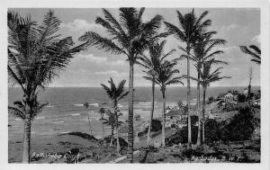Barbados Bathsheba Coast Palm Trees Promenade