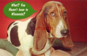 beagle asks WHAT? YOU HAVEN'T BEEN TO WISCONSIN Escape to Wisconsin