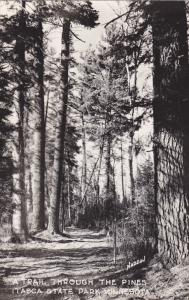 RP; A Trail Through the Pines, Itasca State Park, MINNESOTA, 30-50s