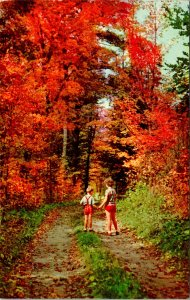 Forest Autumn Trail Children Postcard Unused (34373)
