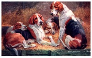 Dog  , Fox Hounds