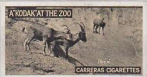 Carreras Cigarette Card Kodak At Zoo 1st Series No 34 Ibex