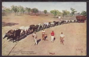 An Australian Sheep Station,Carting the Wool Postcard