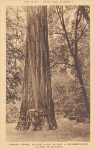The Giant Santa Cruz Big Trees Park California Albertype