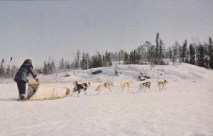 Dogteam Heading Home, YELLOWKNIFE, Northwest Territories, Canada, 40-60´s