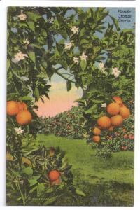 Florida Orange Groves FL Vintage Curteich Linen Postcard