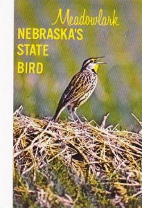 Nebraska North Platte The Western Meadowlark Is Nebraskas State Bird
