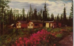 USA, ALASKA HIGHWAY, Canadian boundary at Border City, unused Postcard