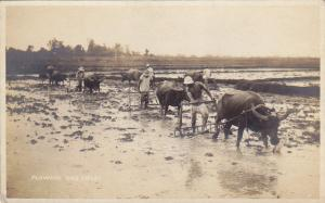 RP: Water buffalo Plowing Rice Fields , Philippines , 00-10s