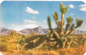 US, Unused Joshua Tree in the Desert, Arizona.  Beautiful