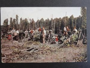 Kent HOP PICKING Set of Pickers c1908 Old Postcard by Young & Cooper