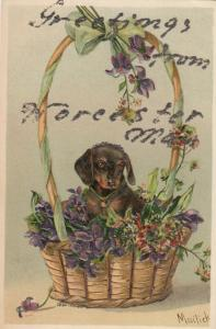 WORCESTER, Massachusetts, 1900-10s; Greetings, Dachshund in a basket of flowers