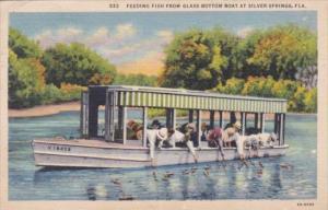 Florida Silver Springs Feeding The Fish From Glass Bottom Boat 1938 Curteich