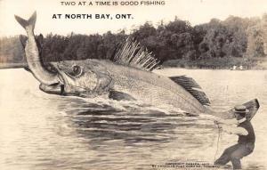 North Bay Ontario Canada Large Fish Catch Real Photo Antique Postcard KA688938