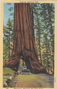 Wawona , Mariposa Big Tree Grove , California , 30-40s